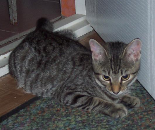 Фото котов в домашних условиях 188