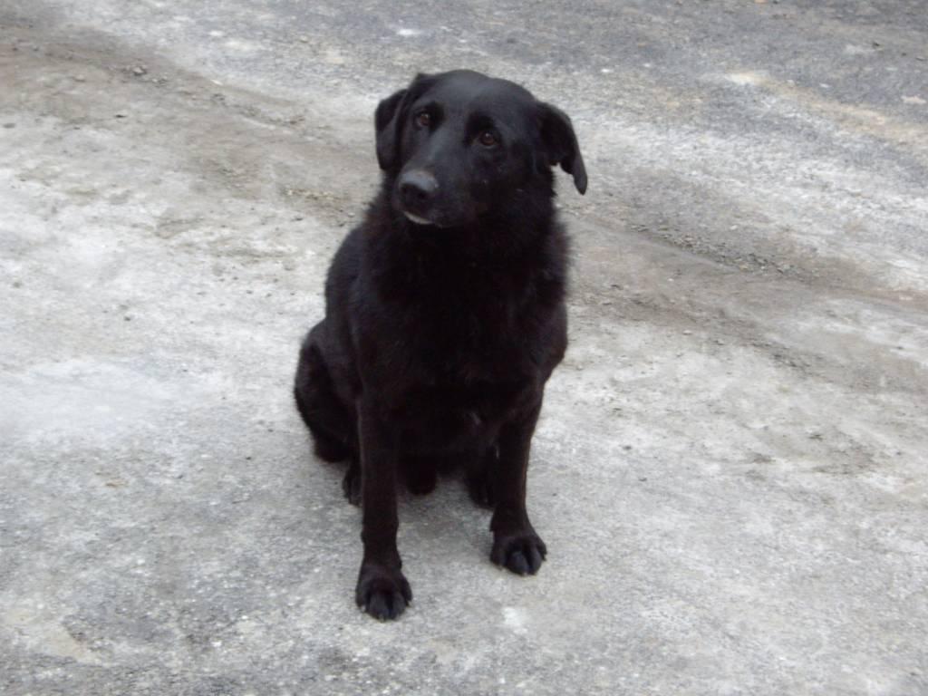 Найден и СРОЧНО ищет дом дружелюбный и веселый щенокметис