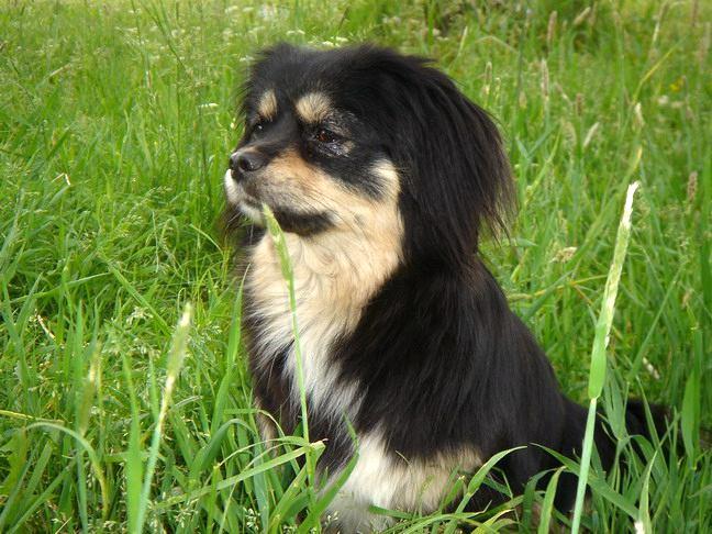Умоляю помогите найти собаку метис