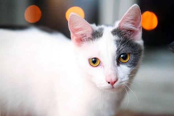 котенок 8 месяцев фото