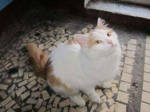 Найден кот в районе метро Дыбенко, ул. Антонова-Овсеенко ...: http://poteryashka.spb.ru/board/7-1-0-15943