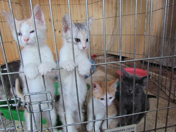приюты для бездомных кошек в саратове термобелье Данный