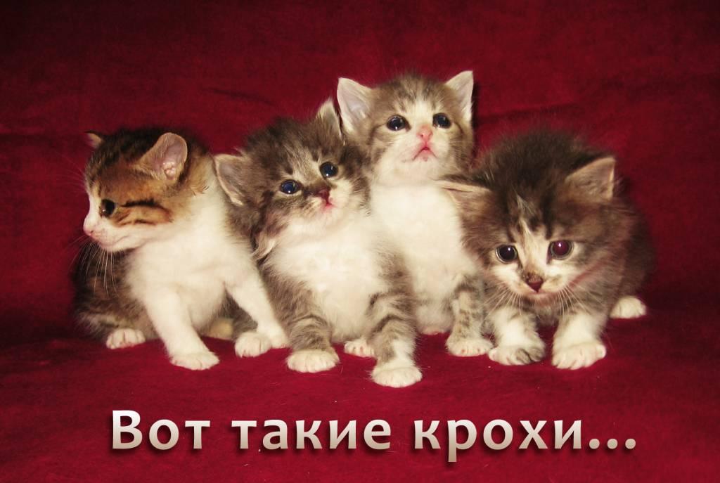 знакомства спб пушкинский район