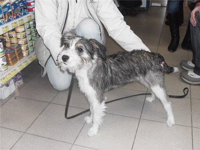 27 октября в 7 часов утра на проспекте Непокоренных у Калининской овощебазы найден щенок, привязанный к дереву.