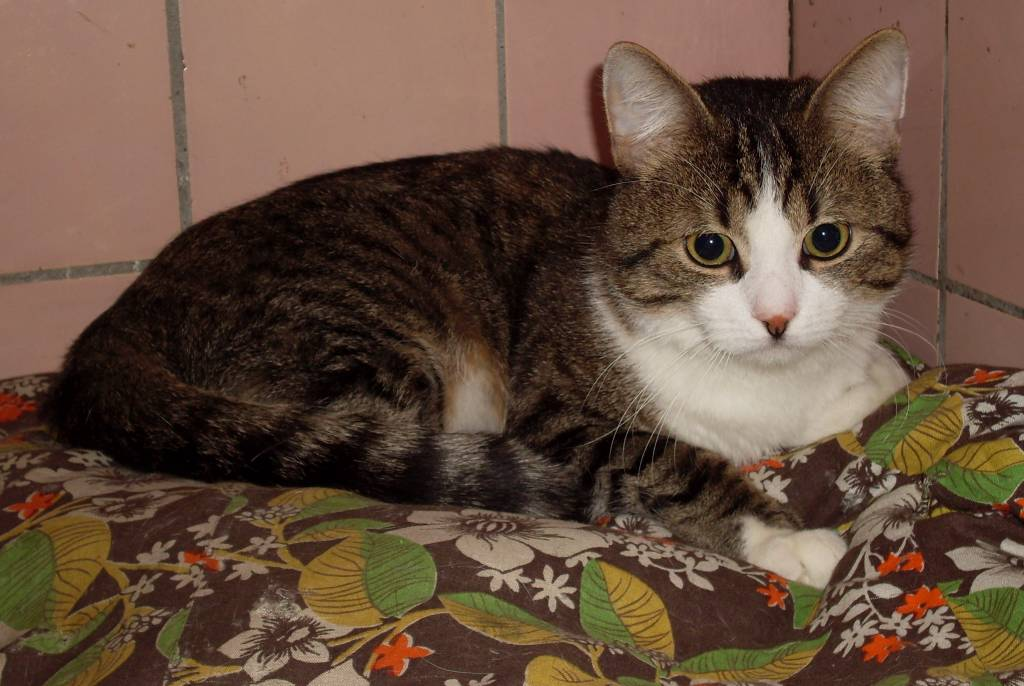 Фото котов в домашних условиях 86