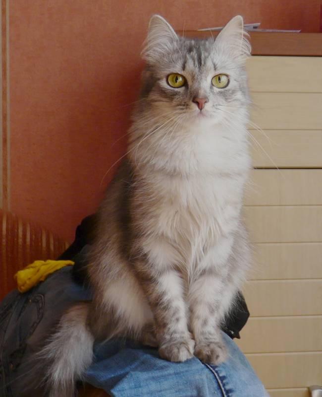 масяня котика