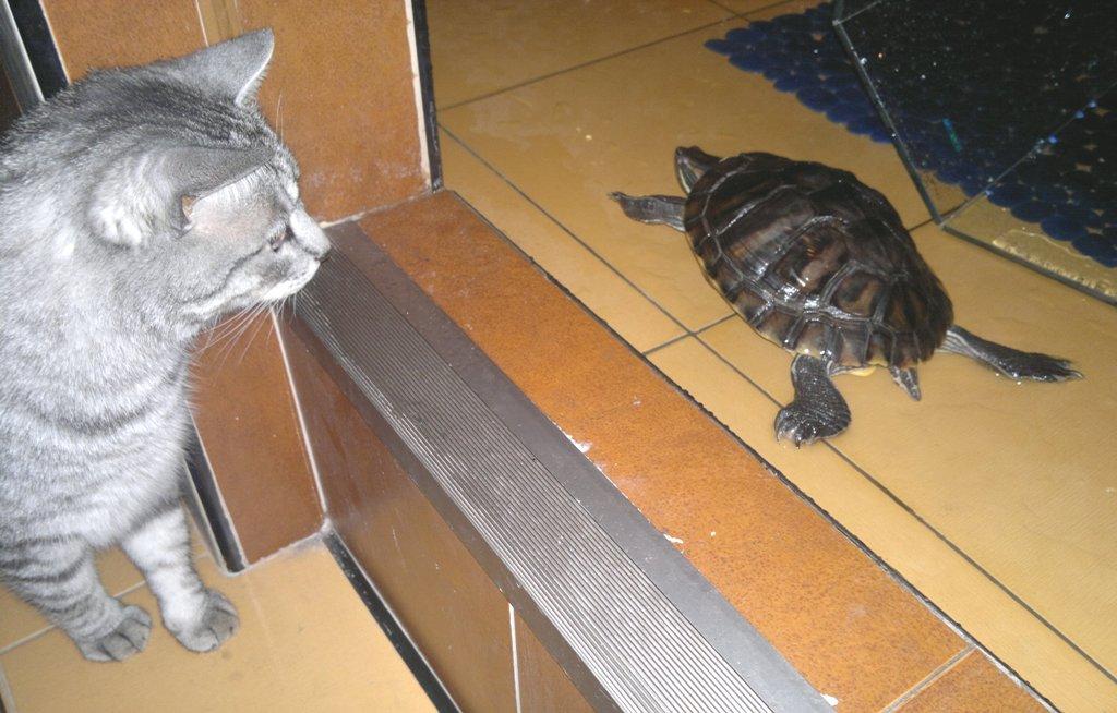 Как ухаживать за маленькими красноухими черепахами в домашних условиях