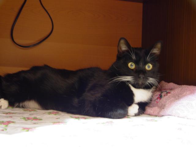 Кот с чёрными лапами