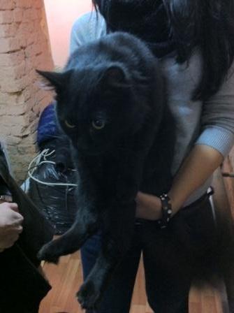 Найден черный кот москва
