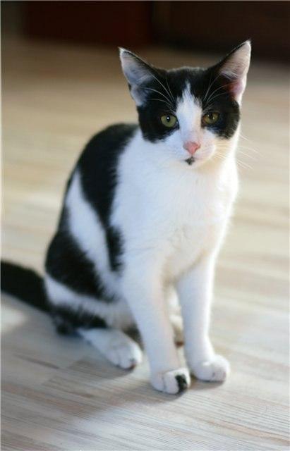 кошки черно белые видео