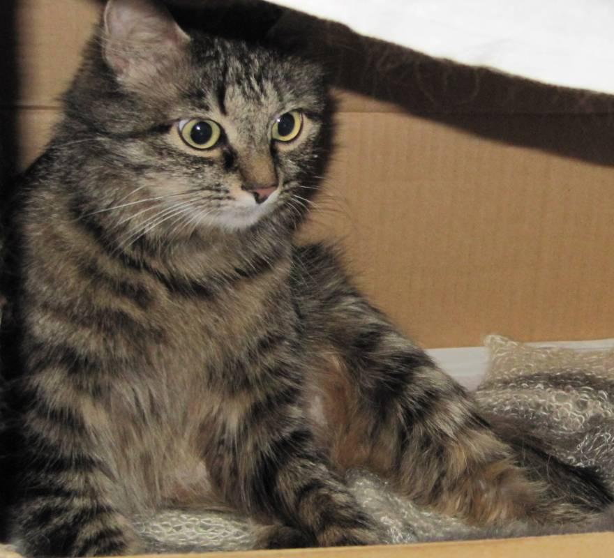 ловит ли мышей кошка после стерилизации