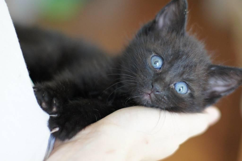Маленький черный котенок ищет дом (рег.№ 29102) - Доска ...: http://poteryashka.spb.ru/board/19-1-0-32423