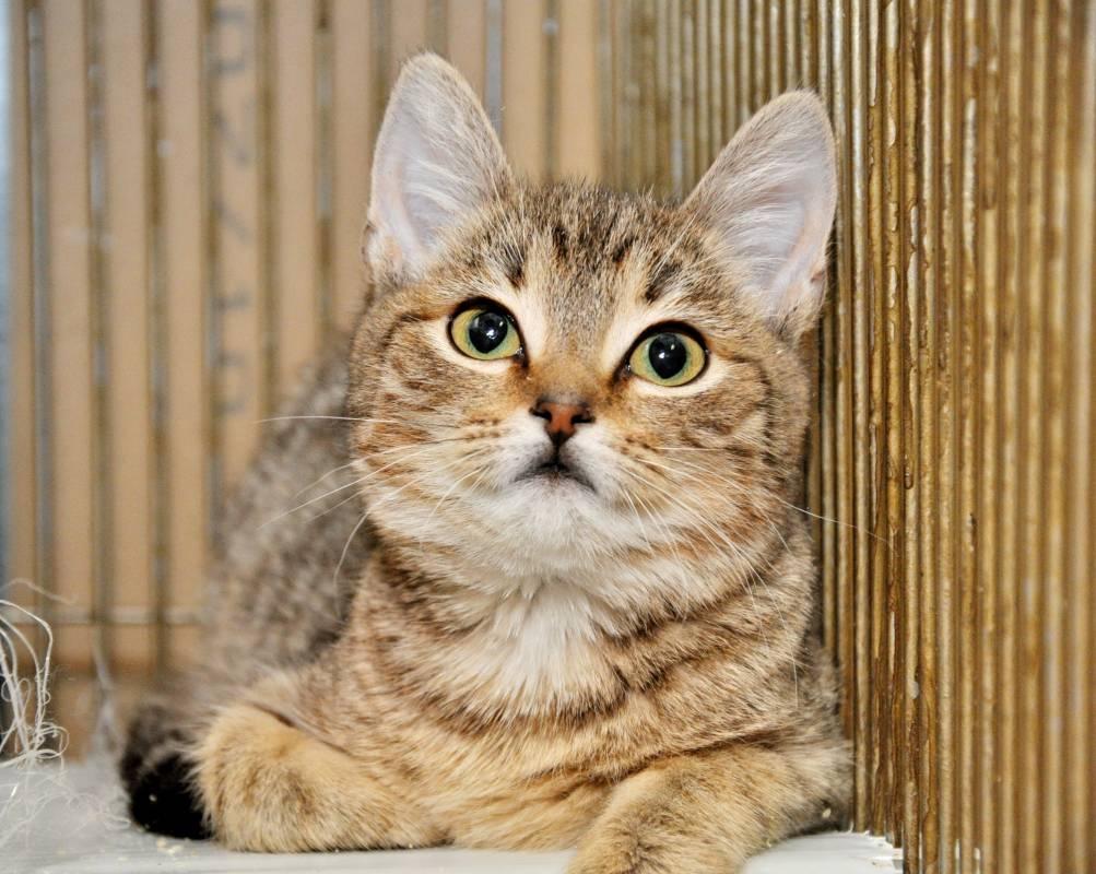 фото добрых котят