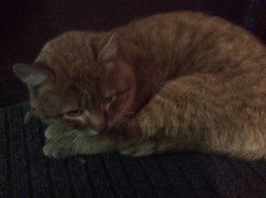 Нашелся кот кошка