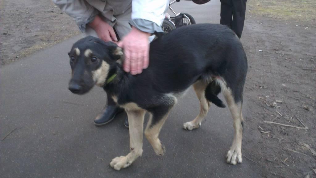 Найдена собака в невском р не молодая