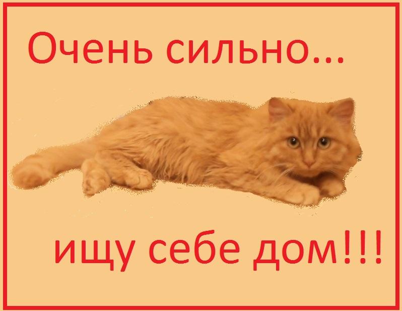 котик пушистенький
