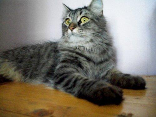 Картинки с 23 февраля с кошкой