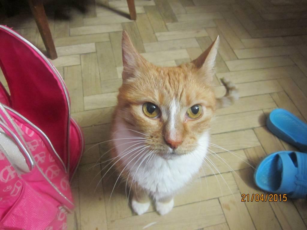 Рыжий кот с белыми полосками