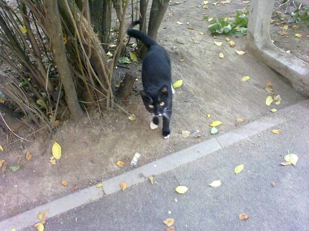 Взять котенка спб