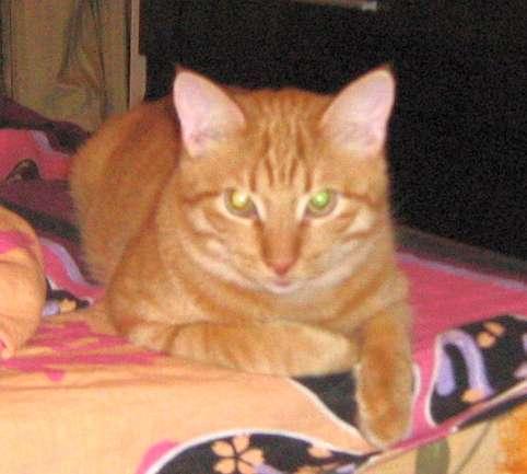 Рыжий кот ушел