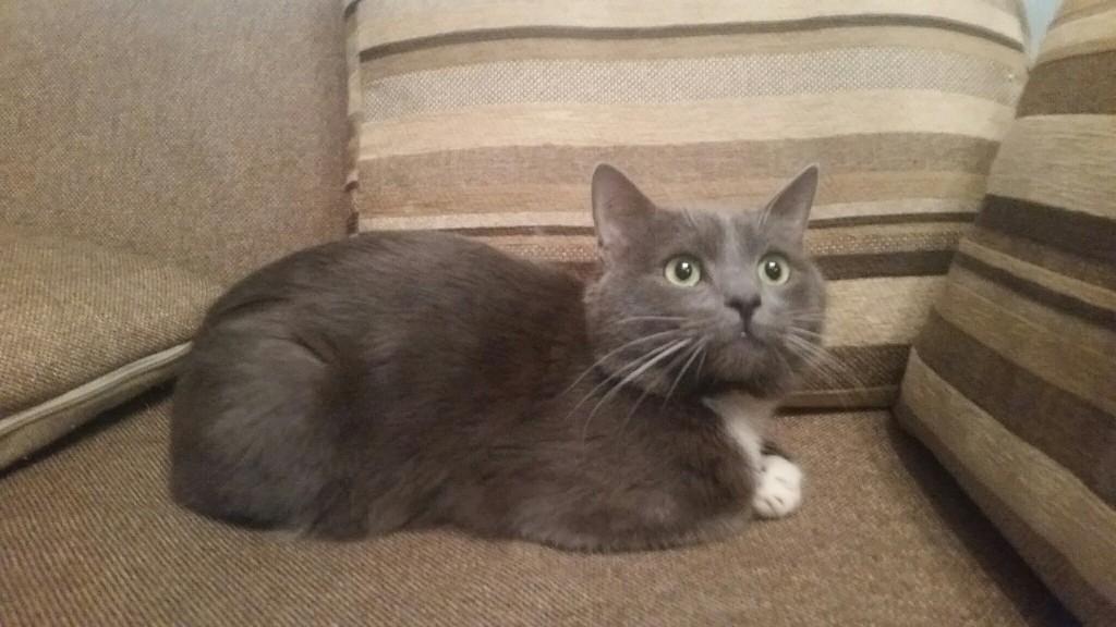 Найден голубой кот