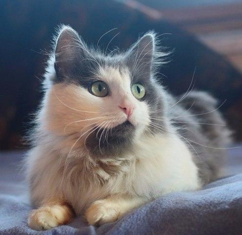 знакомства кот и кошка