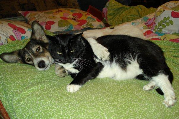 Пропал чёрно белый кот