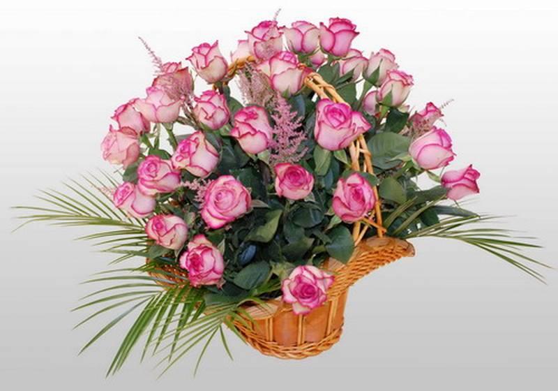 http://poteryashka.spb.ru/_fr/8/7902548.jpg