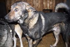 Джек и 3 собак из Ропши