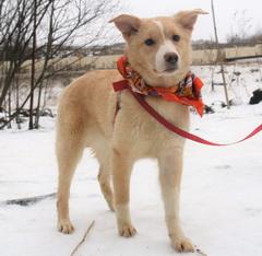 Рэсси - 2 собаки из Красного Бора