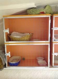Благотворительная зоо-гостинница для кошек Центра «Потеряшка»